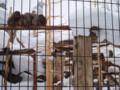 旭山動物園 猿