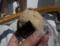 有明海の浅利のおむすび