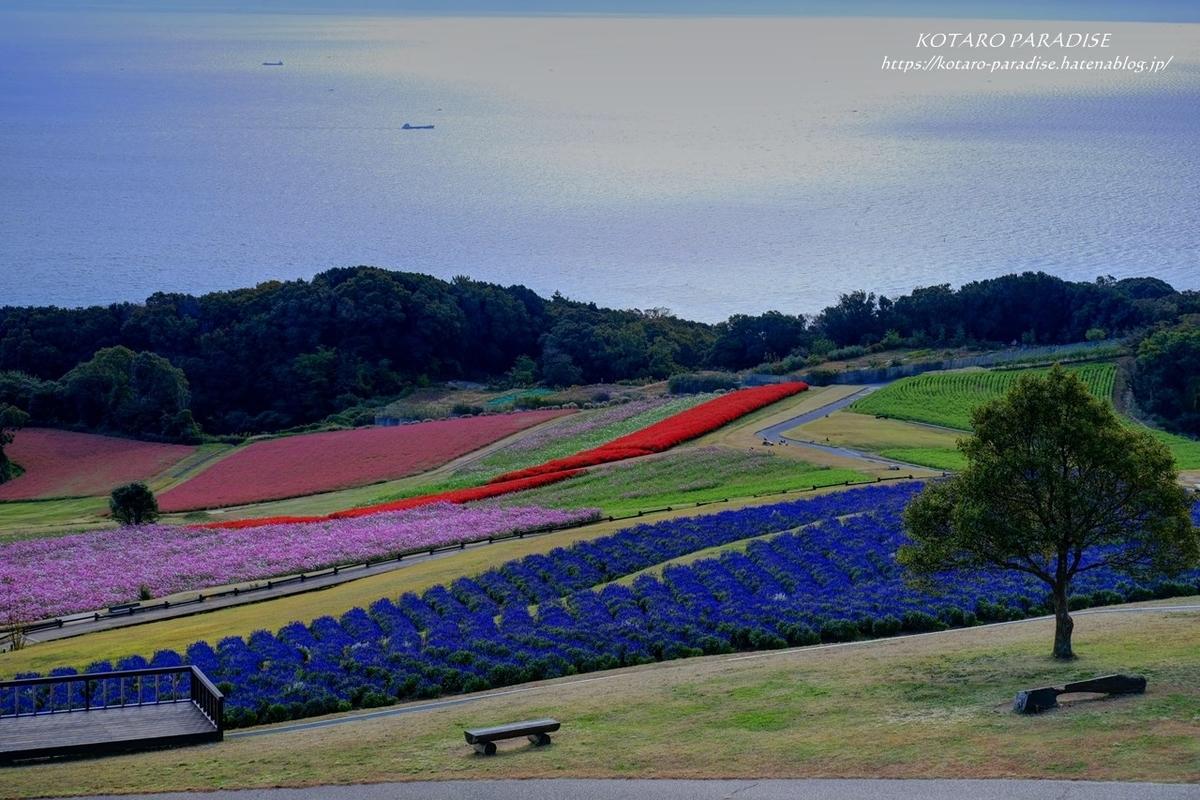 f:id:KOTARO-PARADISE:20201102190252j:plain