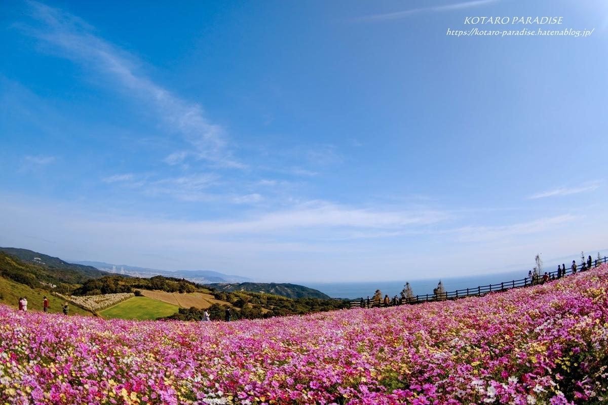 f:id:KOTARO-PARADISE:20201102191210j:plain