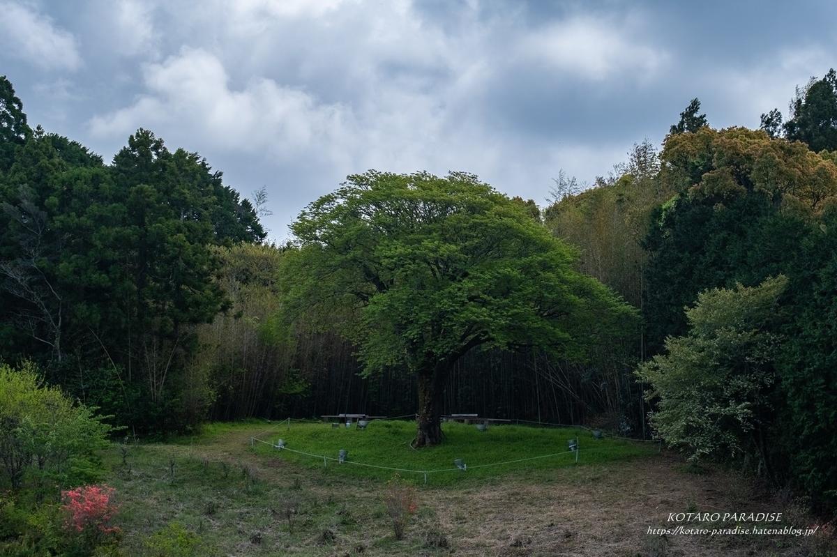 f:id:KOTARO-PARADISE:20210403223603j:plain