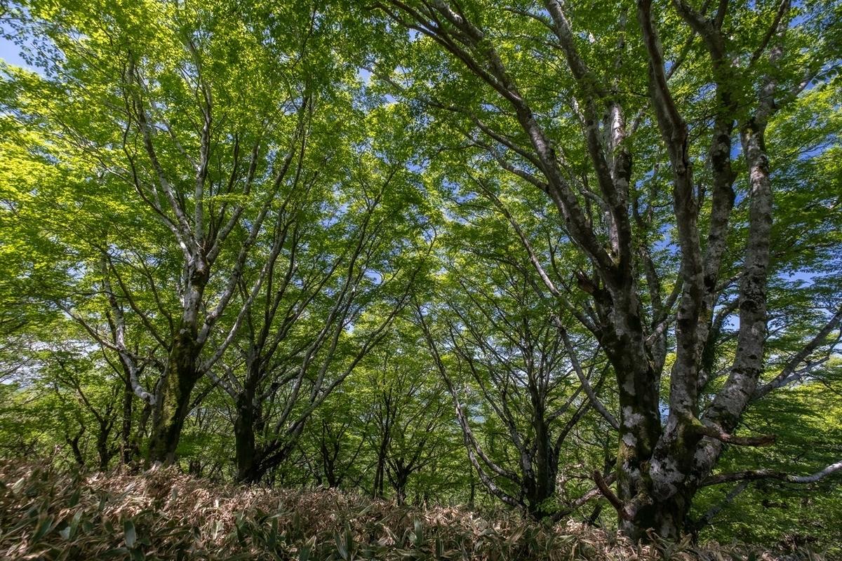 f:id:KOTARO-PARADISE:20210531142126j:plain