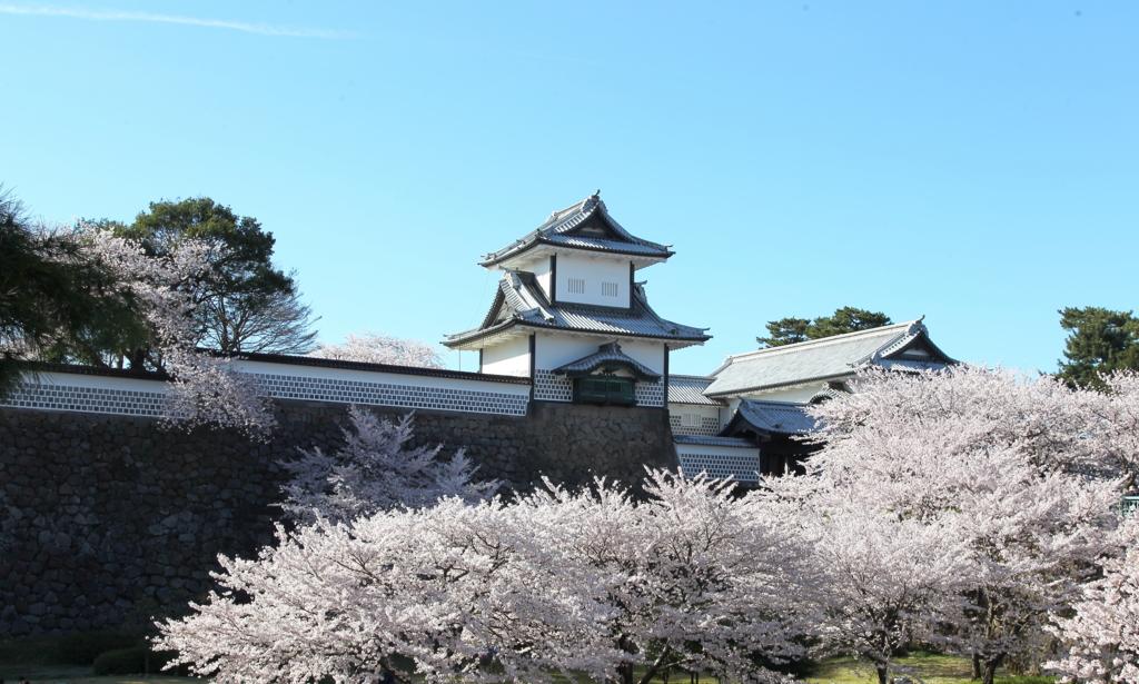 満開の桜をしたがえる金沢城石川門の石川櫓
