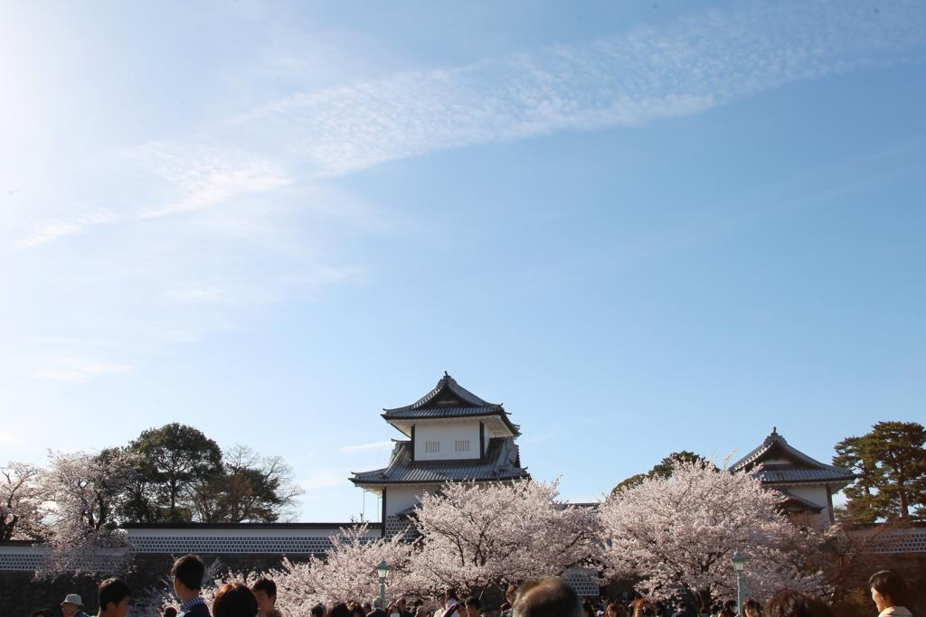 兼六園桂坂口から金沢城石川門を満開の桜の時期に