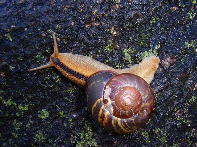 f:id:KUWAKIRA:20110224232304j:image