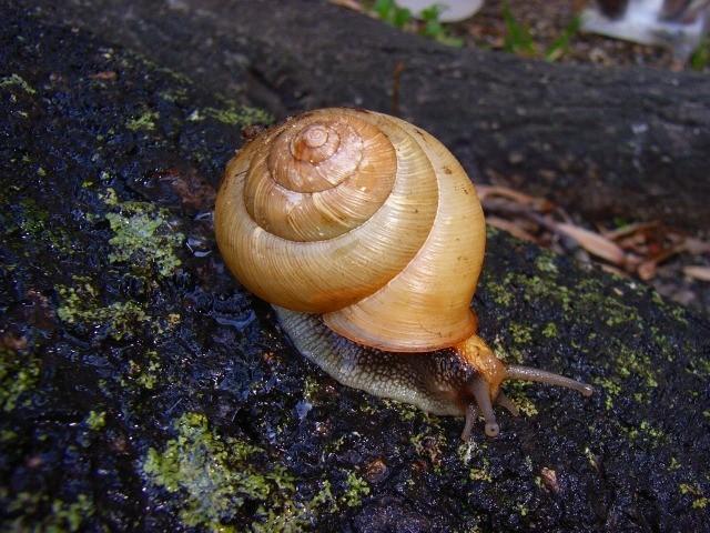 f:id:KUWAKIRA:20110224232305j:image