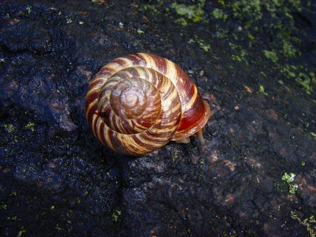 f:id:KUWAKIRA:20110224232306j:image