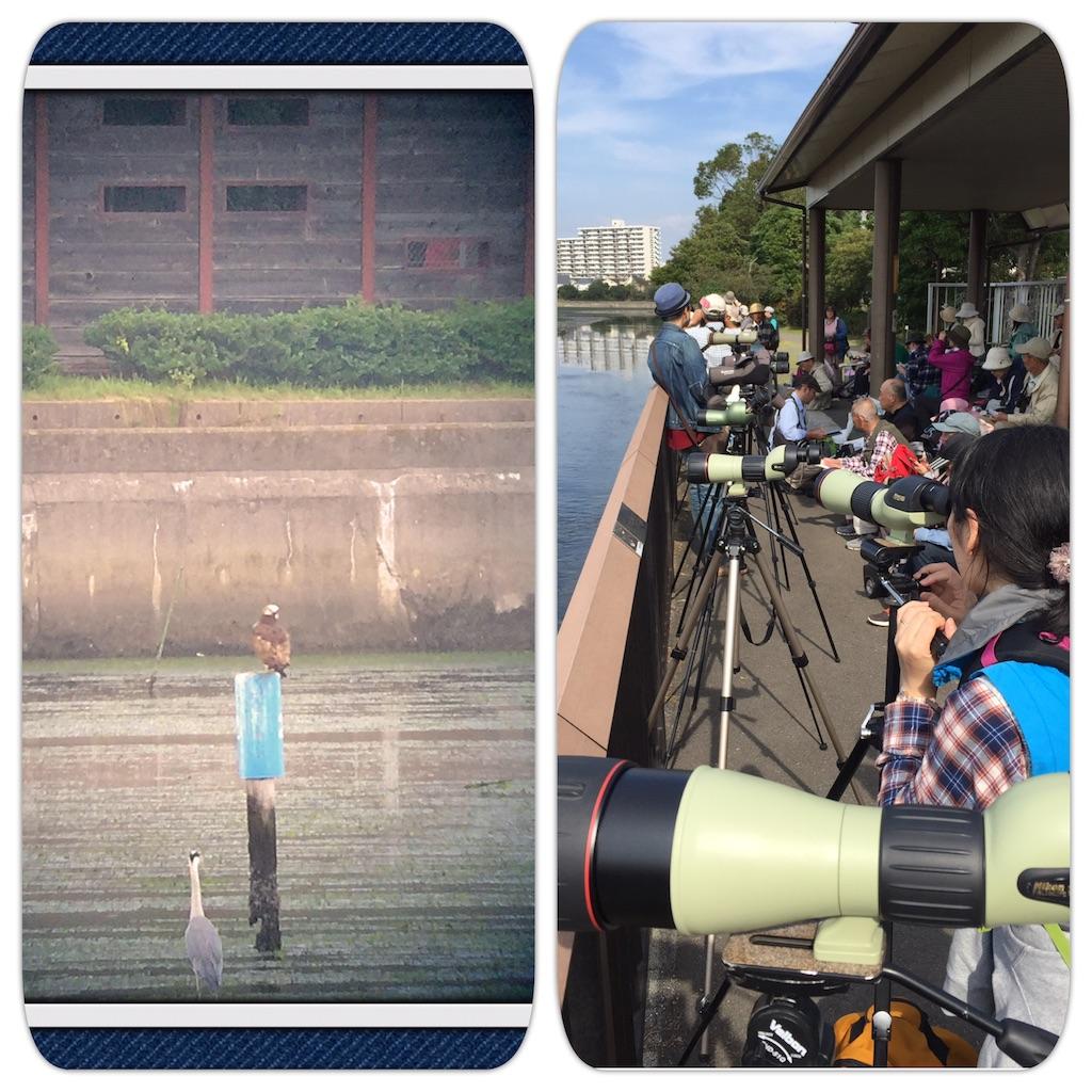 f:id:KYOEI-TOKYO:20161016152049j:image
