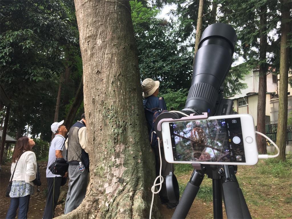 f:id:KYOEI-TOKYO:20170725100543j:image