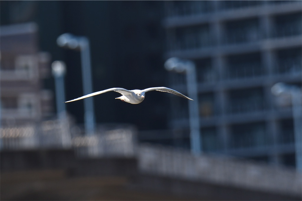 f:id:KYOEI-TOKYO:20190103230834j:image