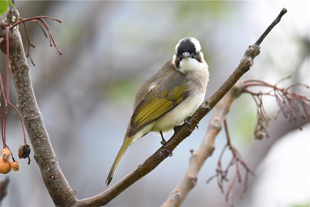 初めて出会いました…台湾の野鳥^_^ - KYOEI鳥ブログ