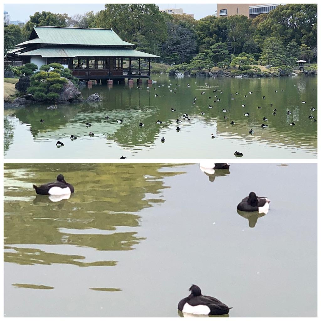 f:id:KYOEI-TOKYO:20190317074920j:image