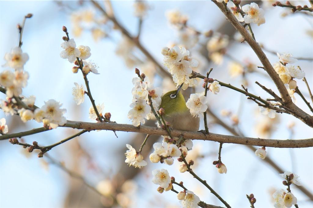 f:id:KYOEI-TOKYO:20210204074636j:image