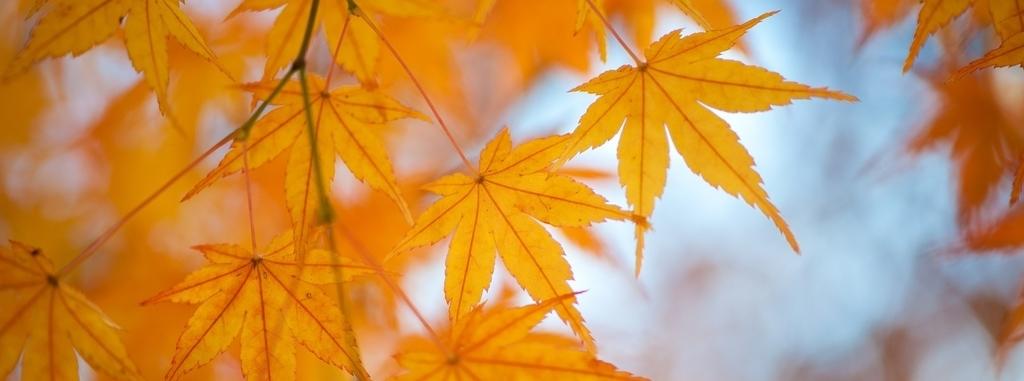 秋を感じる画像