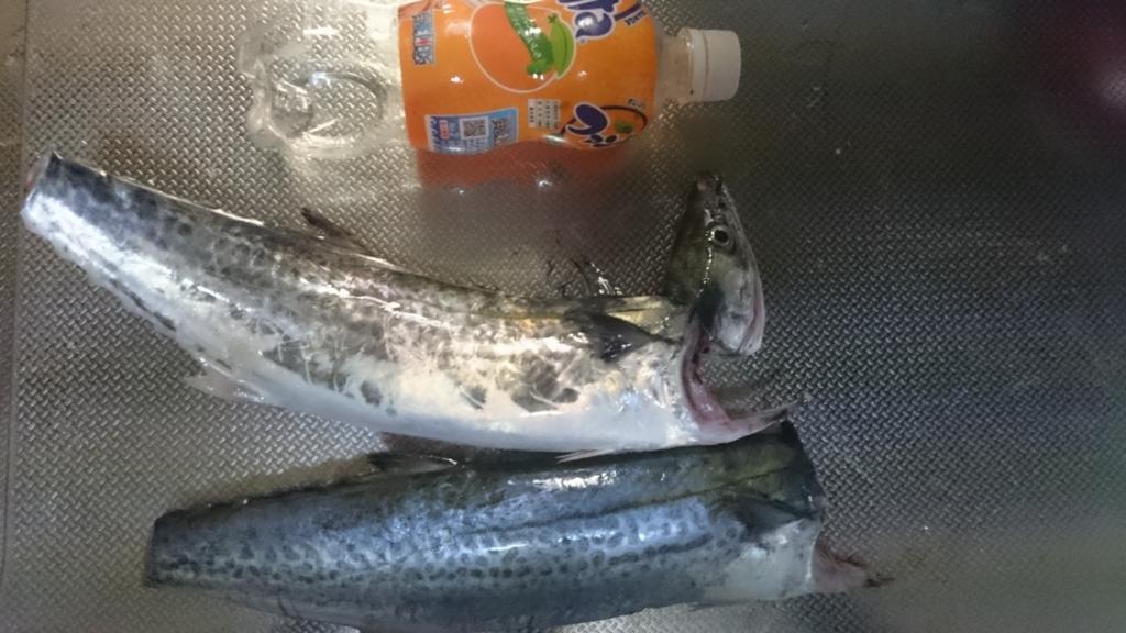 f:id:Kaede-Fishing:20160928235859j:plain