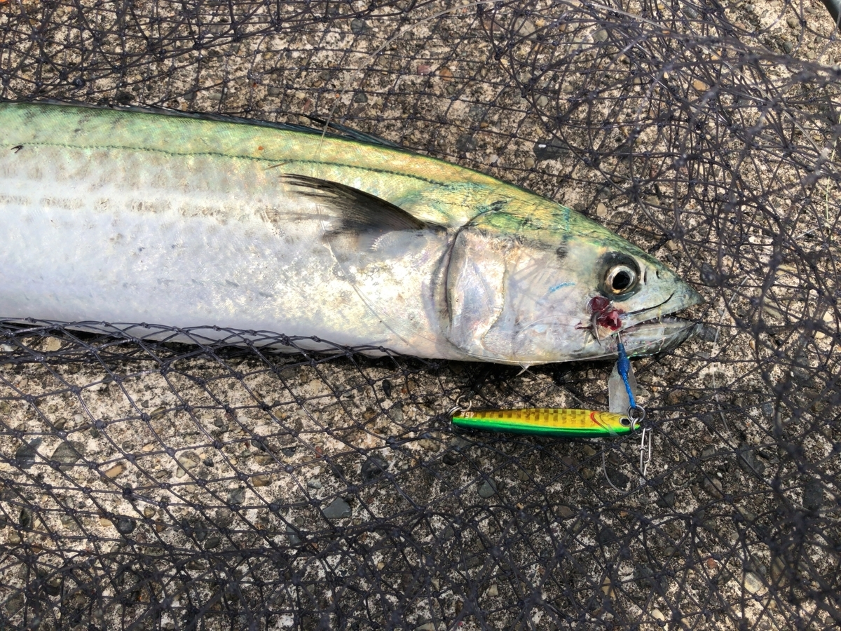 f:id:Kaede-Fishing:20200831031712j:plain