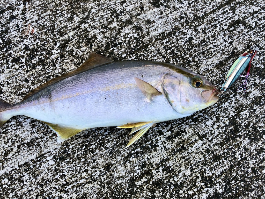 f:id:Kaede-Fishing:20200908125659j:plain