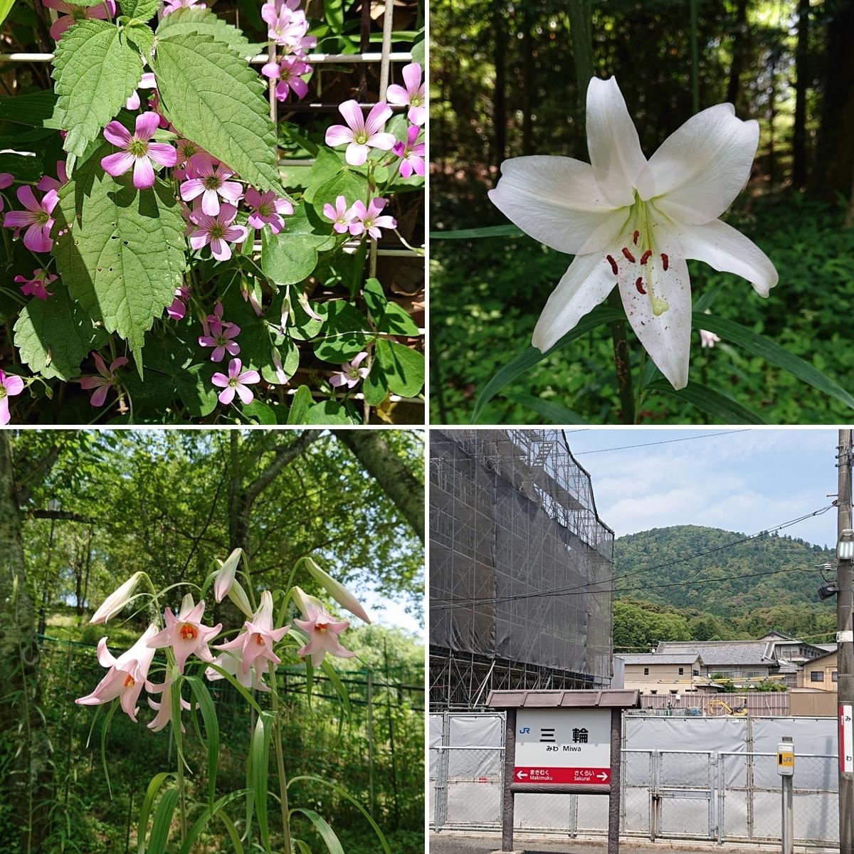f:id:Kaimotu_Hatuji:20190607215453j:plain