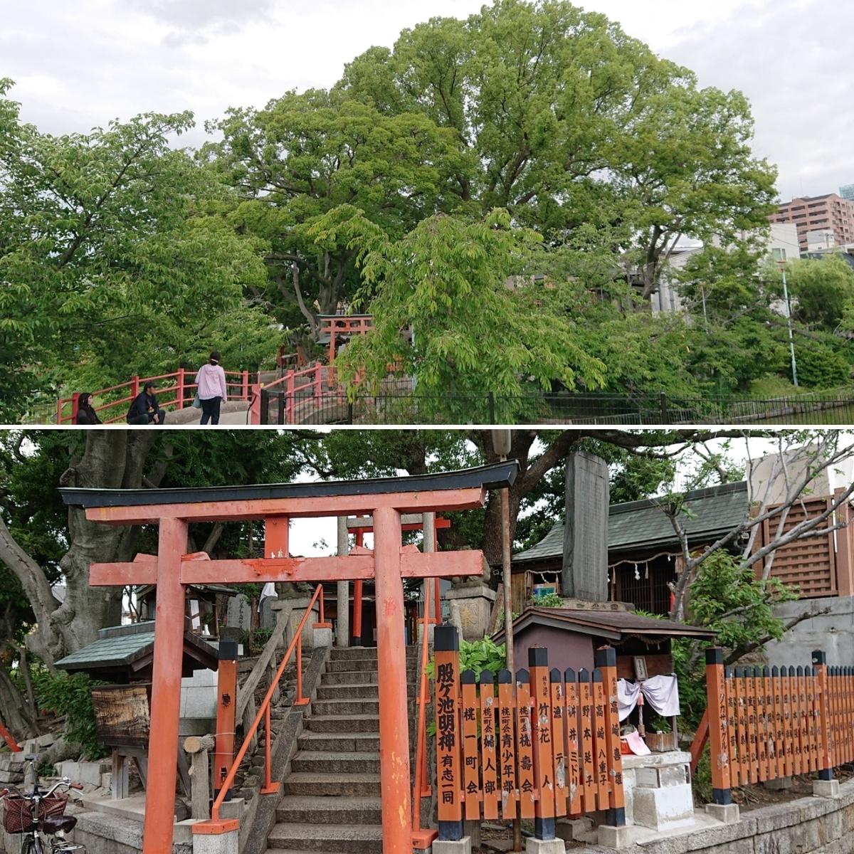 f:id:Kaimotu_Hatuji:20190617185709j:plain