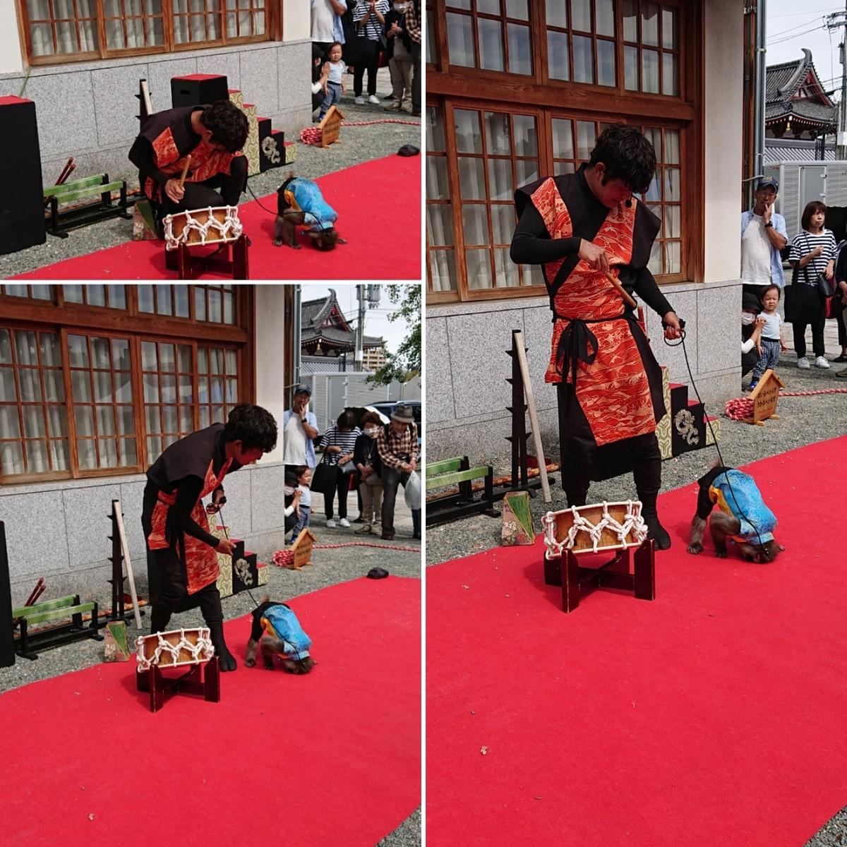 f:id:Kaimotu_Hatuji:20190923163057j:plain
