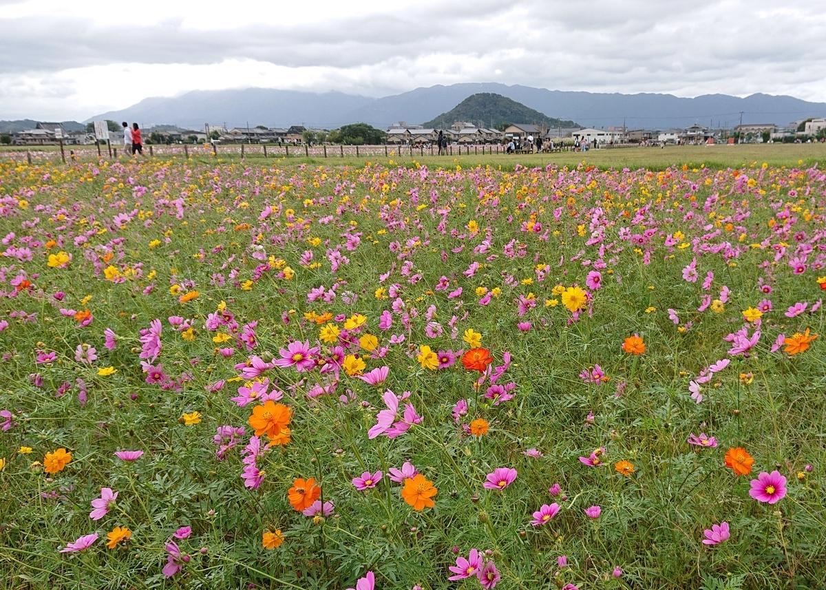 f:id:Kaimotu_Hatuji:20191013190904j:plain
