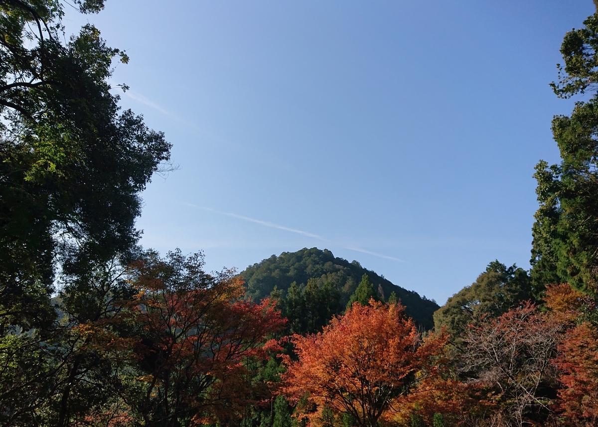 f:id:Kaimotu_Hatuji:20191117190754j:plain