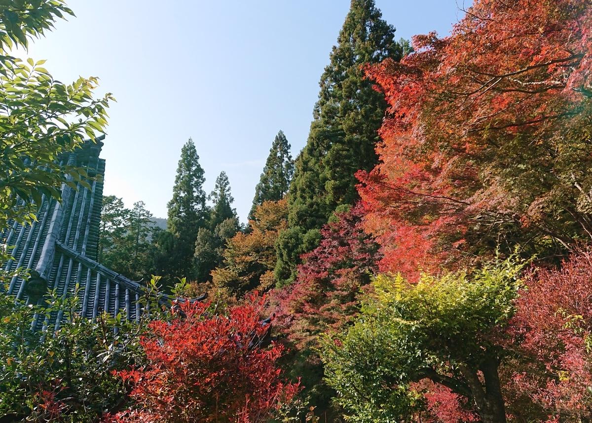 f:id:Kaimotu_Hatuji:20191117190914j:plain
