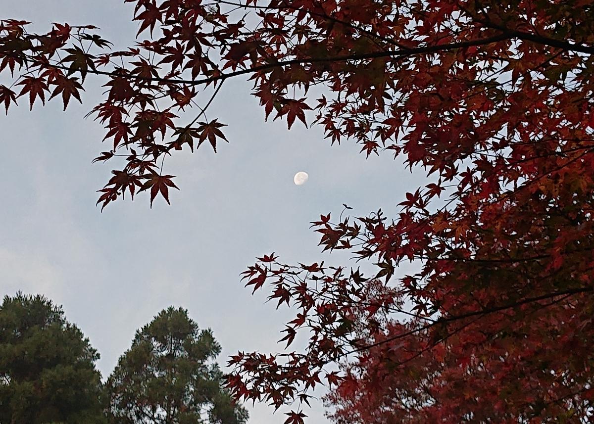 f:id:Kaimotu_Hatuji:20191117191515j:plain