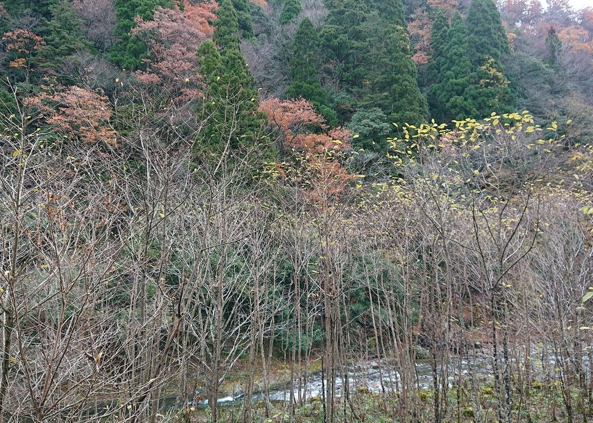 f:id:Kaimotu_Hatuji:20191201034728j:plain