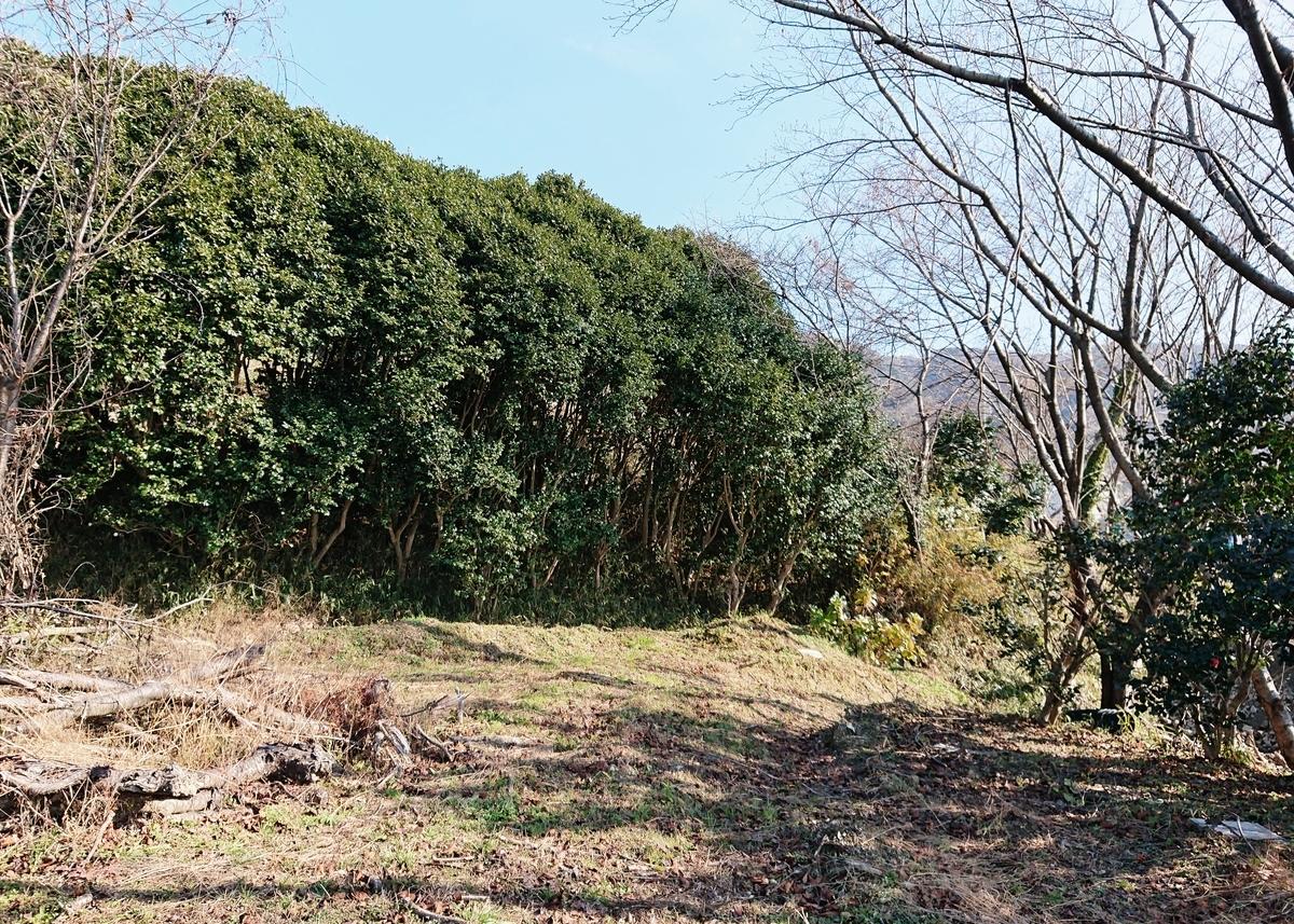 f:id:Kaimotu_Hatuji:20200116191523j:plain