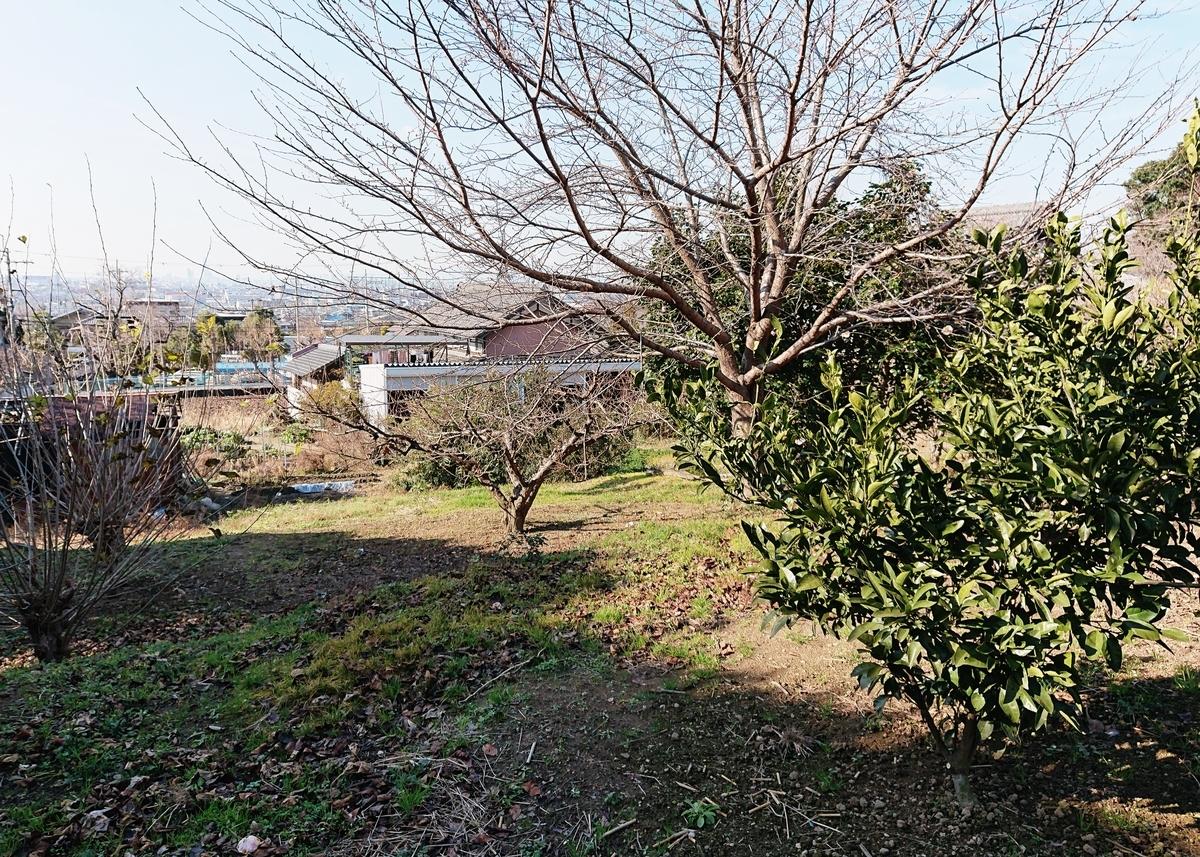 f:id:Kaimotu_Hatuji:20200116191550j:plain