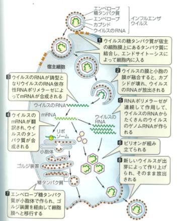 f:id:Kaimotu_Hatuji:20200319185655p:plain
