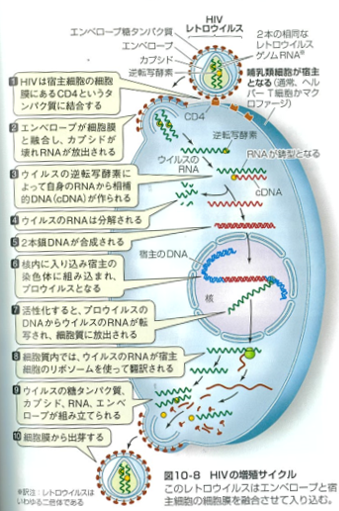 f:id:Kaimotu_Hatuji:20200319185704p:plain