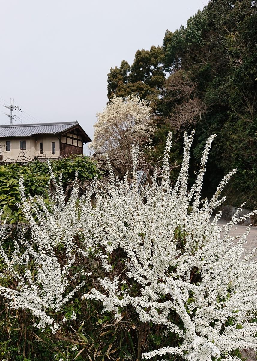 f:id:Kaimotu_Hatuji:20200322184312j:plain