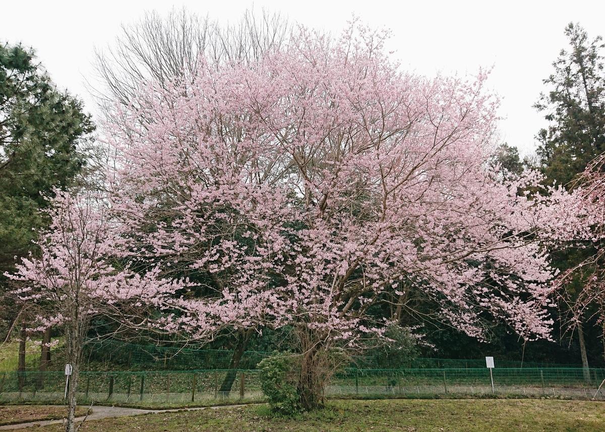 f:id:Kaimotu_Hatuji:20200322184402j:plain