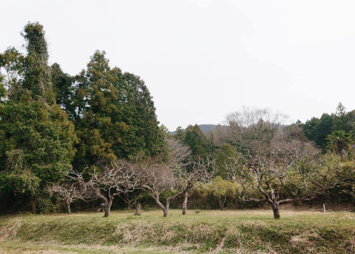 f:id:Kaimotu_Hatuji:20200322184523j:plain
