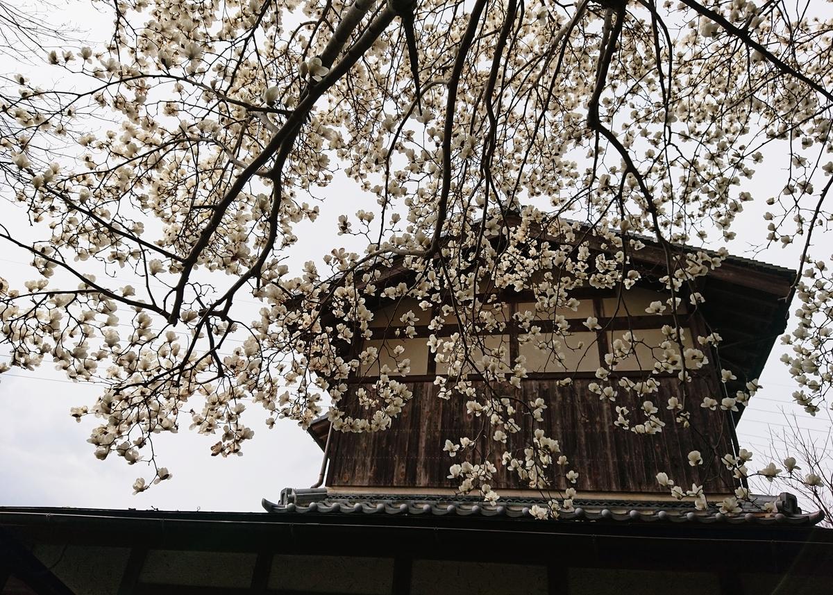f:id:Kaimotu_Hatuji:20200322190138j:plain