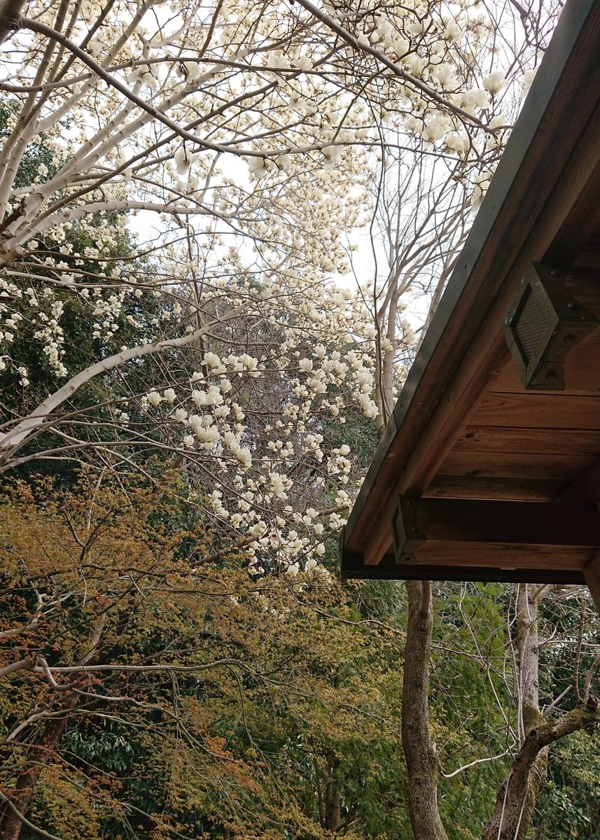 f:id:Kaimotu_Hatuji:20200322192616j:plain