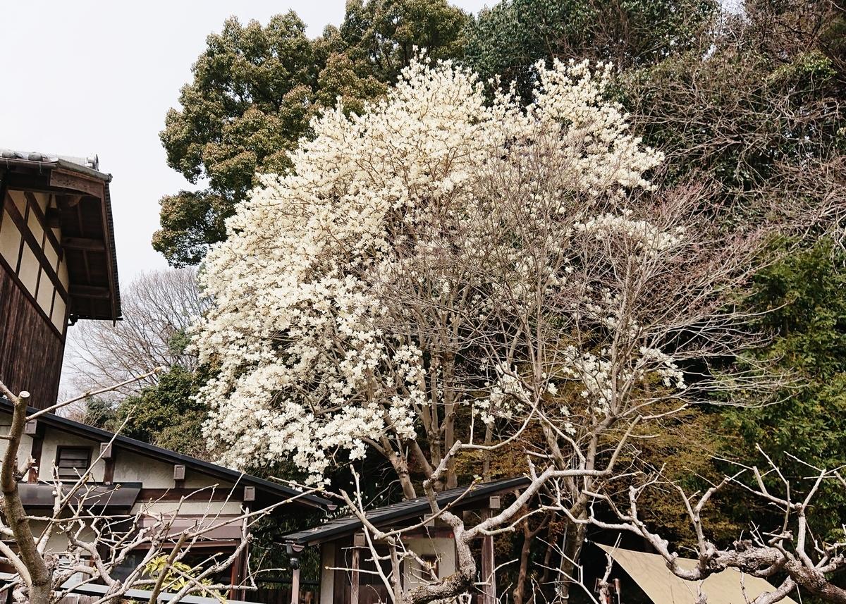 f:id:Kaimotu_Hatuji:20200322192717j:plain