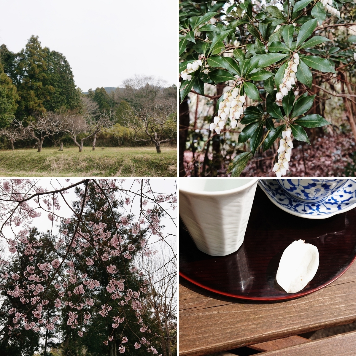 f:id:Kaimotu_Hatuji:20200323043108j:plain