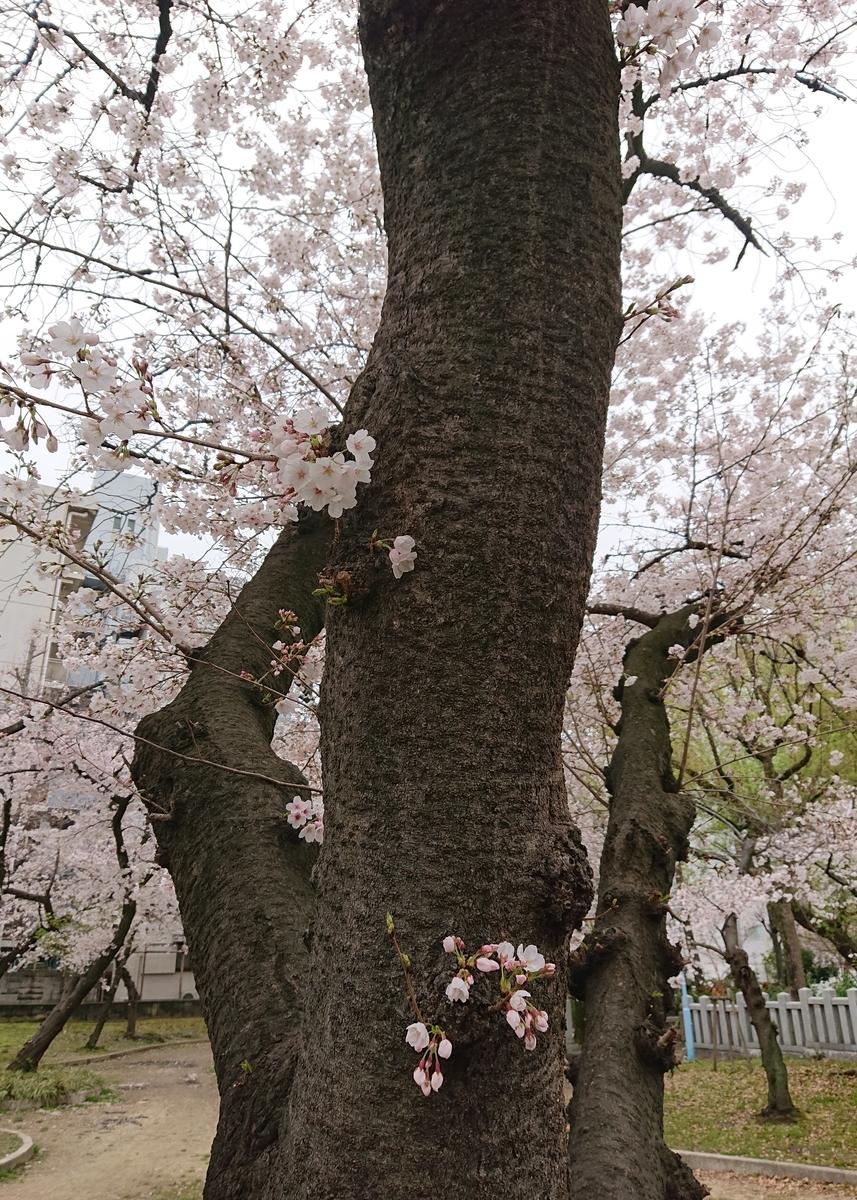 f:id:Kaimotu_Hatuji:20200330183623j:plain