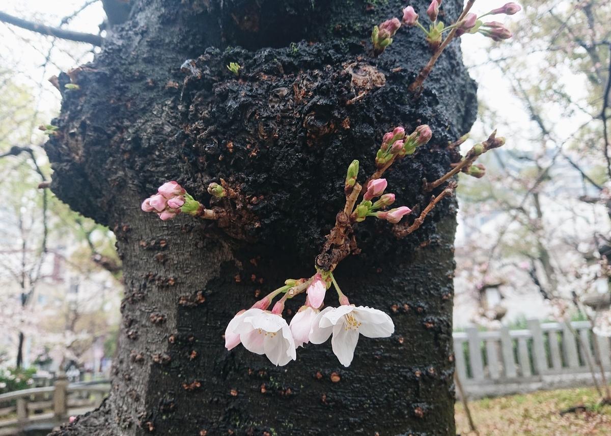 f:id:Kaimotu_Hatuji:20200330183731j:plain