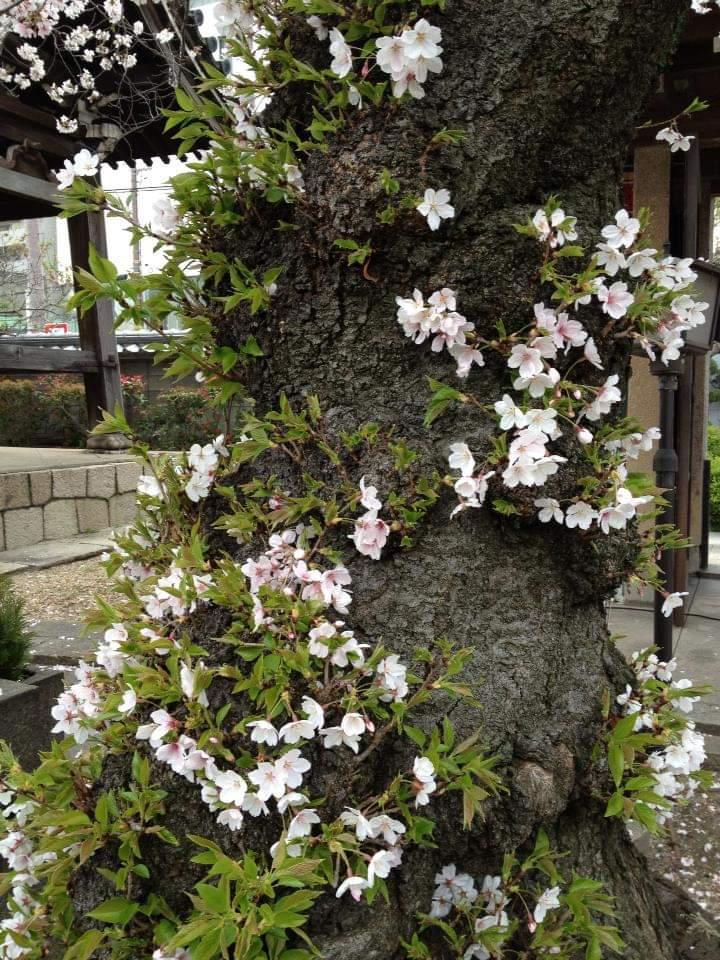 f:id:Kaimotu_Hatuji:20200331092638j:plain