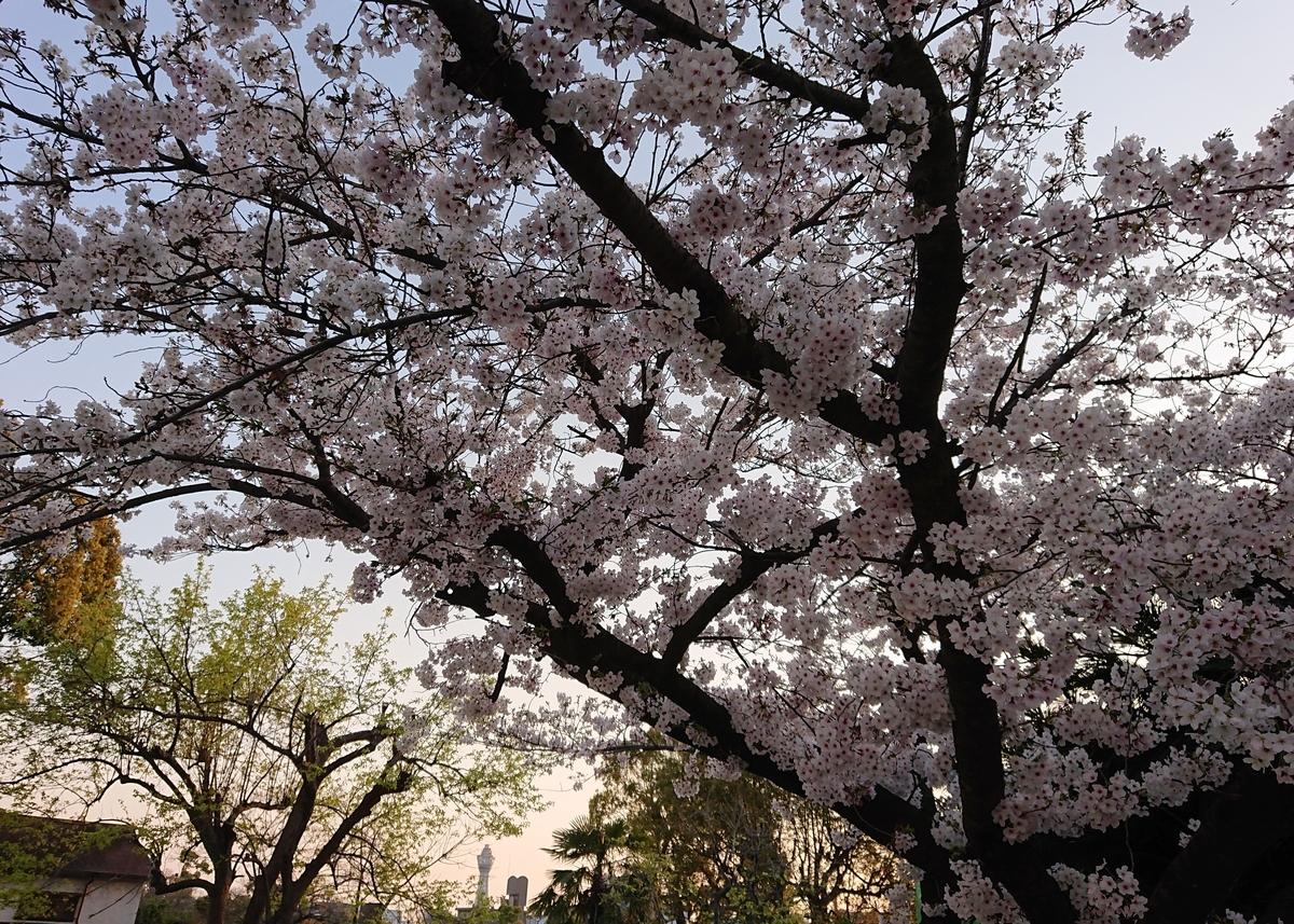 f:id:Kaimotu_Hatuji:20200404182639j:plain