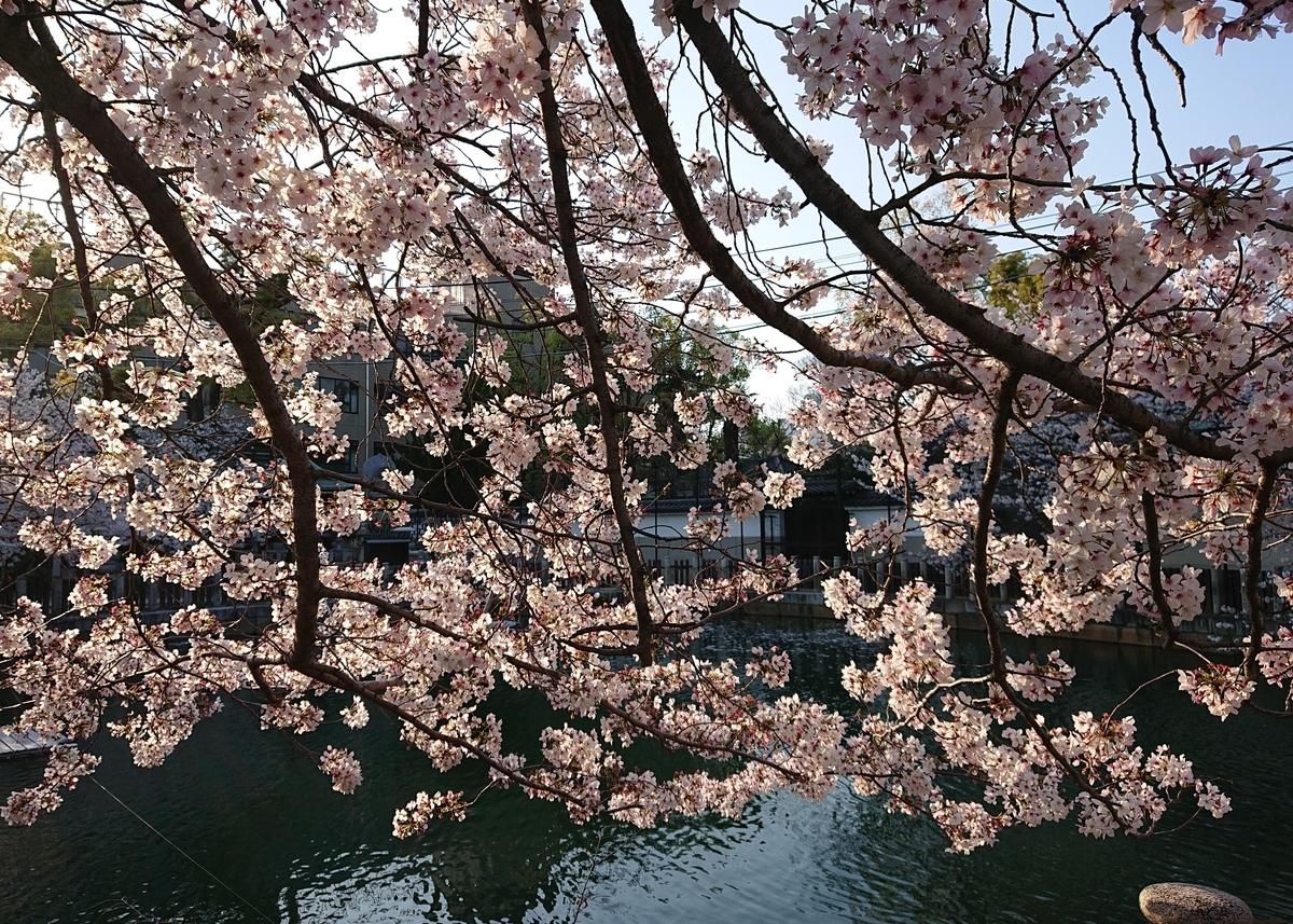 f:id:Kaimotu_Hatuji:20200404183352j:plain
