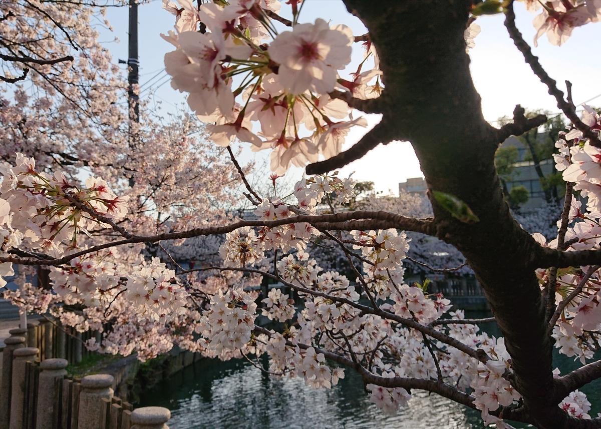 f:id:Kaimotu_Hatuji:20200404195524j:plain