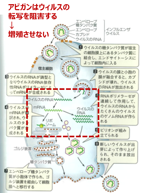 f:id:Kaimotu_Hatuji:20200418121802p:plain