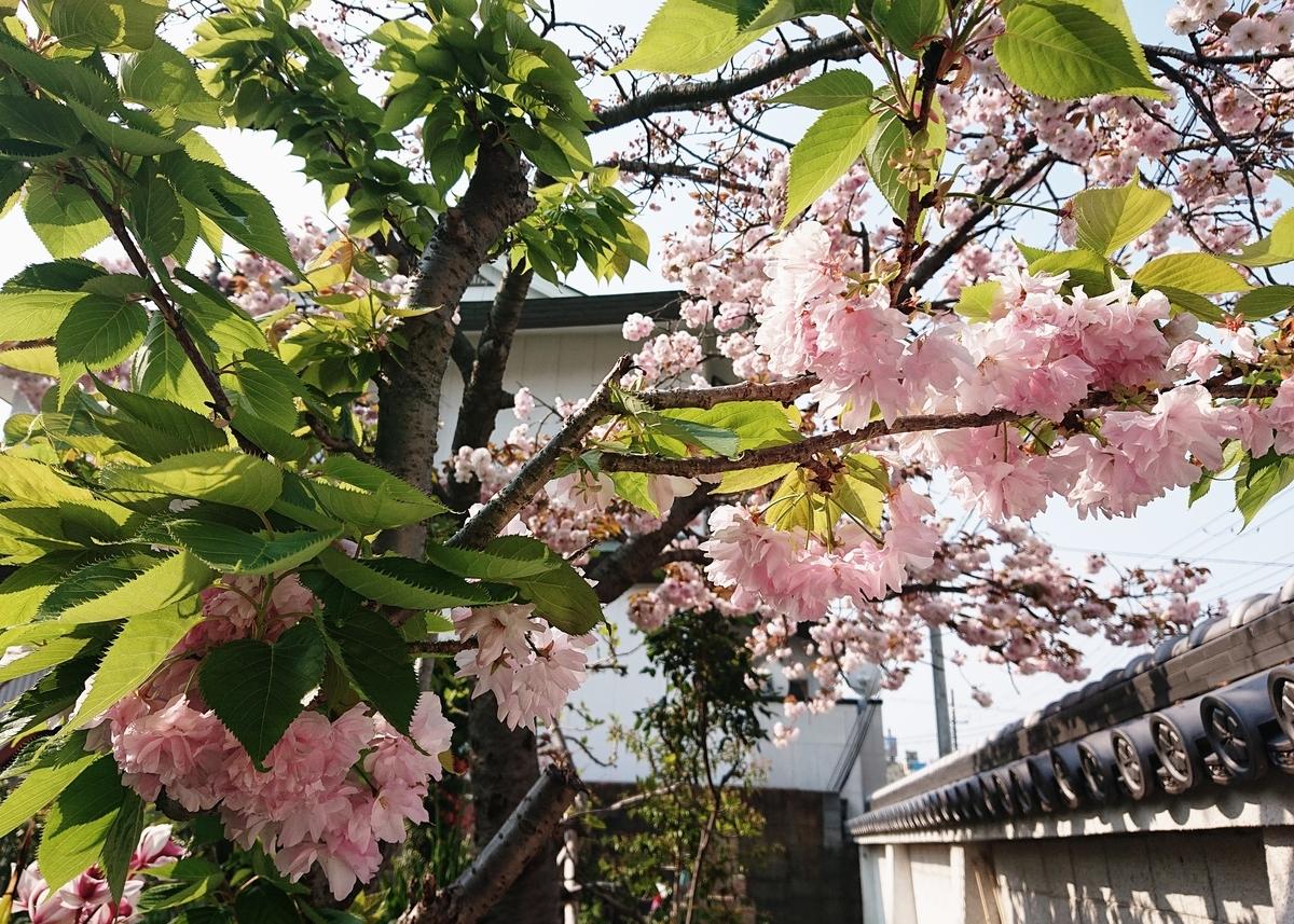 f:id:Kaimotu_Hatuji:20200430144650j:plain