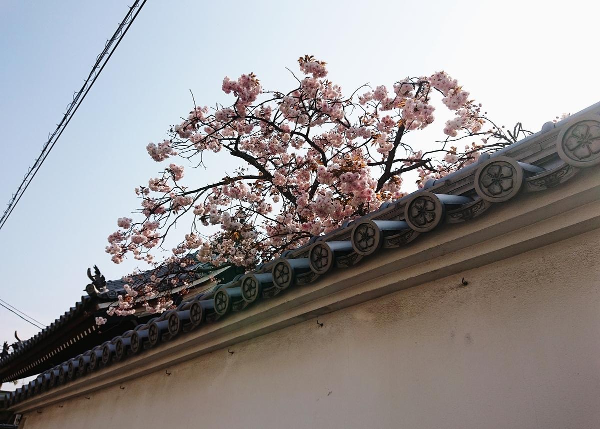 f:id:Kaimotu_Hatuji:20200430144739j:plain