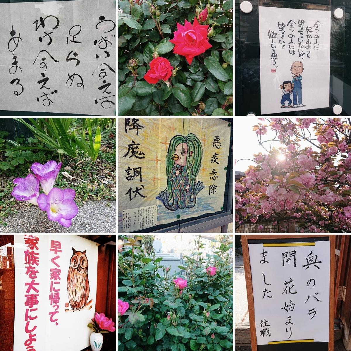 f:id:Kaimotu_Hatuji:20200430161125j:plain